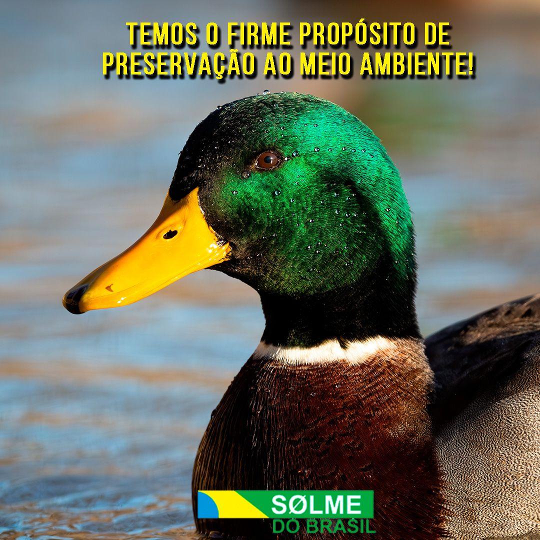 Temos o firme propósito de preservação ao meio ambiente!